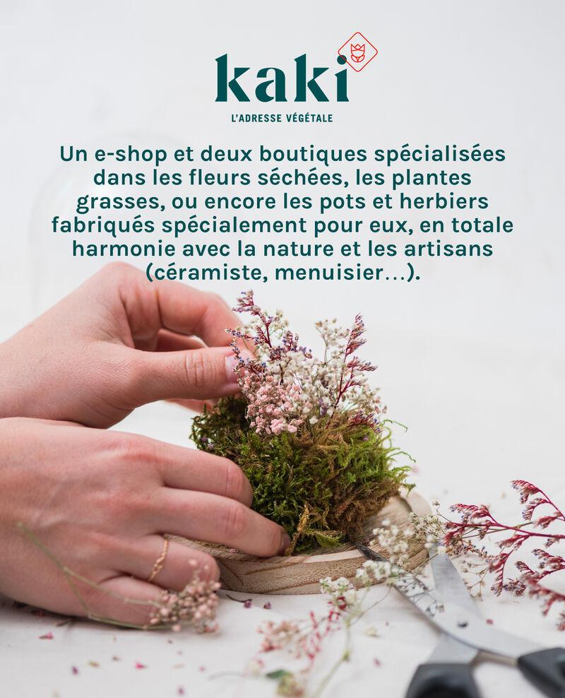 FR_Tuile_Marais_1
